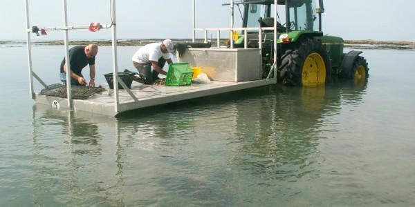 Comptage d'huîtres sur la remorque (@SMEL)