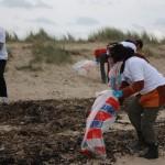Nettoyage de la plage de la pointe d'Agon