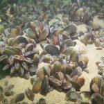 Évaluer la présence de pesticides en mer par la recherche dans des espèces sentinelles
