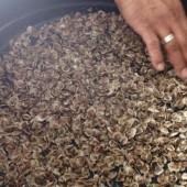 Electrolyse de l'eau de mer : salutaire pour la croissance et la survie des huîtres creuses ?