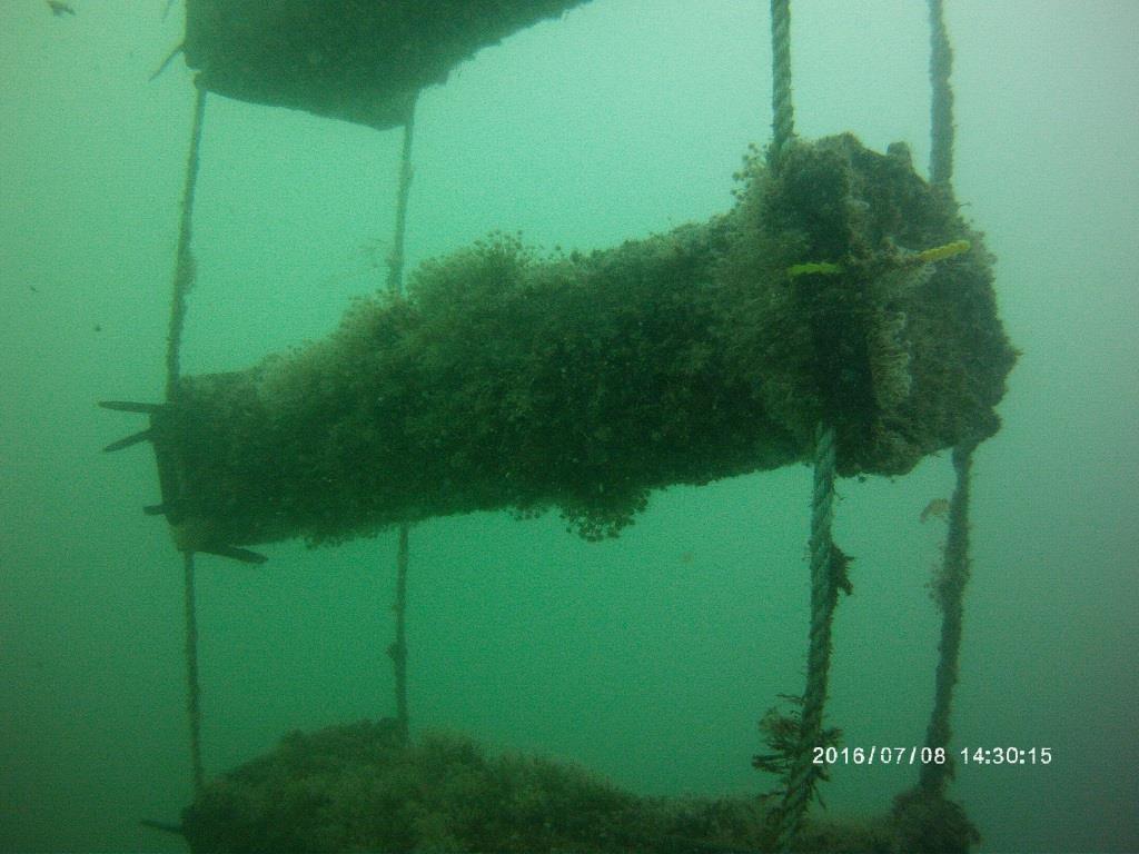 Panier à huîtres installé en pleine eau (@SMEL)
