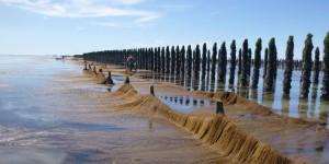 Les sargasses, une richesse pour la Normandie ?