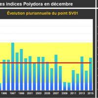 Ind. Polydora