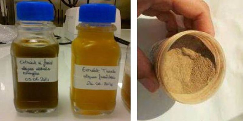 Extrait d'algues liquide ou en poudre (@SMEL)