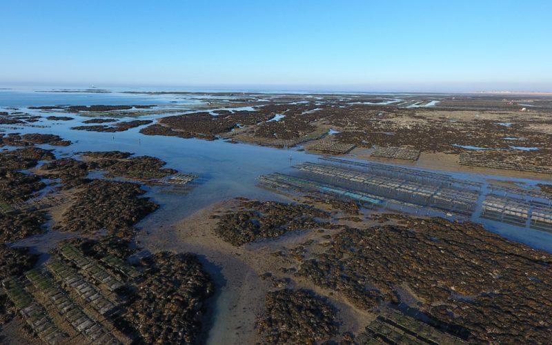 Parcs ostréicoles de Blainville sur Mer (@SMEL)
